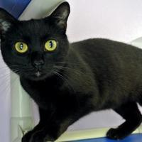 Adopt A Pet :: Morion - Camano Island, WA