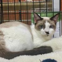 Adopt A Pet :: Numi (Newmom 032917 Kit 2) - McDonough, GA