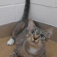Adopt A Pet :: Storm - Wooster, OH