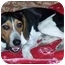 Photo 2 - Beagle Mix Puppy for adoption in Elk Grove, California - Buster