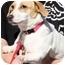 Photo 1 - Beagle/Dachshund Mix Dog for adoption in Duluth, Georgia - Trixie