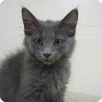 Adopt A Pet :: Matock - Milwaukee, WI