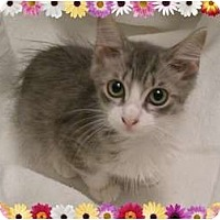 Adopt A Pet :: Joyous Juniper - Hurst, TX
