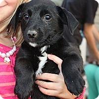 Adopt A Pet :: Alexis - PENDING - kennebunkport, ME