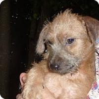 Adopt A Pet :: Phinneus - Raleigh, NC