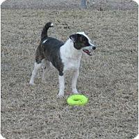 Adopt A Pet :: ROCKY - Scottsdale, AZ