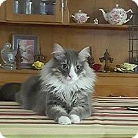 Adopt A Pet :: Inky - Dallas, TX