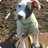 Adopt A Pet :: Hiccup - North Olmsted, OH