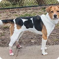 Adopt A Pet :: Lilly - Elmwood Park, NJ