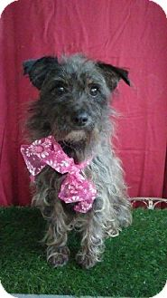 Terrier (Unknown Type, Small) Mix Dog for adoption in pasadena, California - LEAH