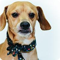 Adopt A Pet :: Steven - New Castle, PA