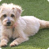 Adopt A Pet :: Liberty - Woonsocket, RI