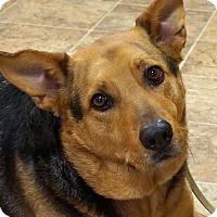 Adopt A Pet :: Mason - Sprakers, NY