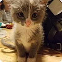 Adopt A Pet :: Lilliana - Chicago, IL