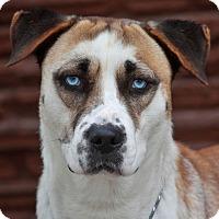 Adopt A Pet :: Demi von Demmin - Los Angeles, CA