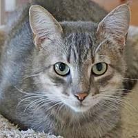 Adopt A Pet :: Simon Caesar - Davis, CA