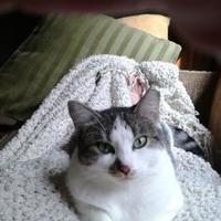 Adopt A Pet :: Jewel - Blackstock, ON