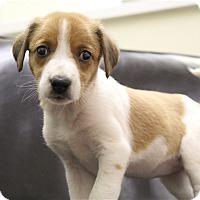 Adopt A Pet :: Heidi - Neosho, MO