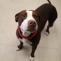 Adopt A Pet :: Madeline - Auburn, AL