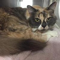 Adopt A Pet :: BOOTSIE - Rancho Cucamonga, CA