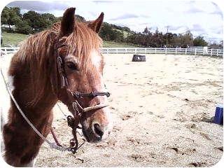 Pony - Other Mix for adoption in El Dorado Hills, California - Chico