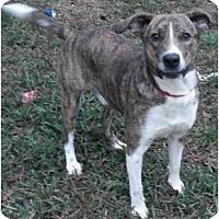 Adopt A Pet :: Milo - Kingwood, TX