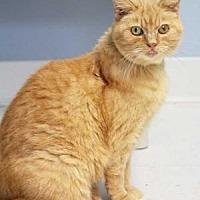 Adopt A Pet :: Scarlette - Batavia, OH