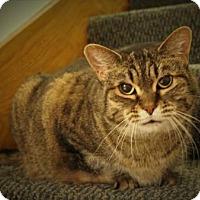 Adopt A Pet :: BooBoo - West Des Moines, IA