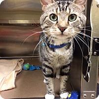 Adopt A Pet :: Pepperoni (TAS #15) - Trenton, NJ