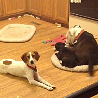 Adopt A Pet :: Noel - Dumfries, VA