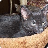Adopt A Pet :: ARTESA - Medford, WI