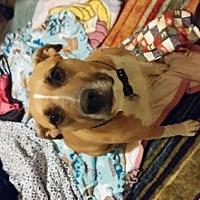 Adopt A Pet :: Petunia - Colorado - Fulton, MO