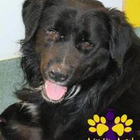 Adopt A Pet :: Rummy - Georgetown, TX