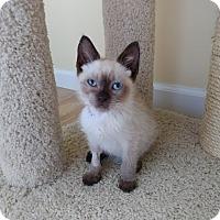 Adopt A Pet :: Moe - Turnersville, NJ