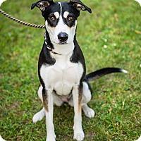 Adopt A Pet :: Ciri - Cambridge, ON