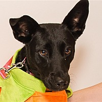 Adopt A Pet :: Sara Cooper - Birmingham, AL