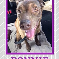 Adopt A Pet :: Bonnie - Great Bend, KS