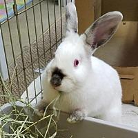 Adopt A Pet :: Bernadette - Columbus, OH