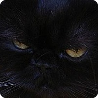 Adopt A Pet :: Moonbeam - Beverly Hills, CA
