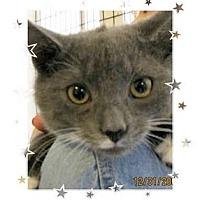 Adopt A Pet :: Mishka - Catasauqua, PA