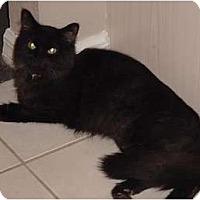 Adopt A Pet :: Geneva - Franklin, NC