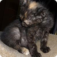 Adopt A Pet :: Princess - Dallas, TX