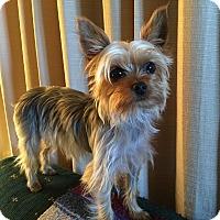 Adopt A Pet :: Pippi - Sheboygan, WI