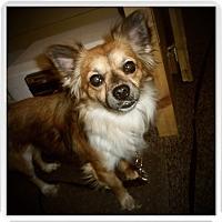 Adopt A Pet :: DAKOTA - Medford, WI