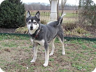 Husky Mix Dog for adoption in Hartford, Connecticut - INDY