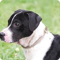 Adopt A Pet :: Maximus - Lincolnton, NC