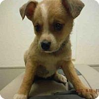 Adopt A Pet :: A574391 - Oroville, CA