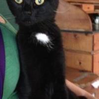Adopt A Pet :: Francine - Athabasca, AB