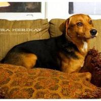 Adopt A Pet :: Velvet08312012 - Baton Rouge, LA