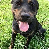 Adopt A Pet :: Duke - Sturbridge, MA